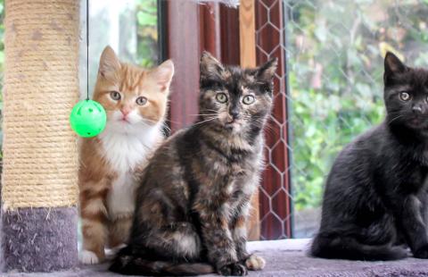 Choosing a Kitten