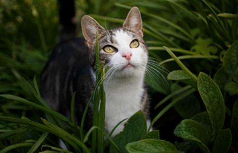 Choosing an Adult Cat