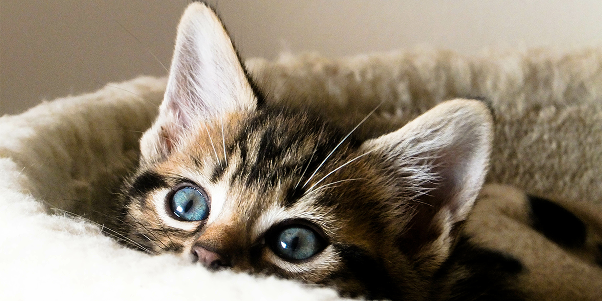 Helping Your New Cat Kitten Settle In International Cat Care