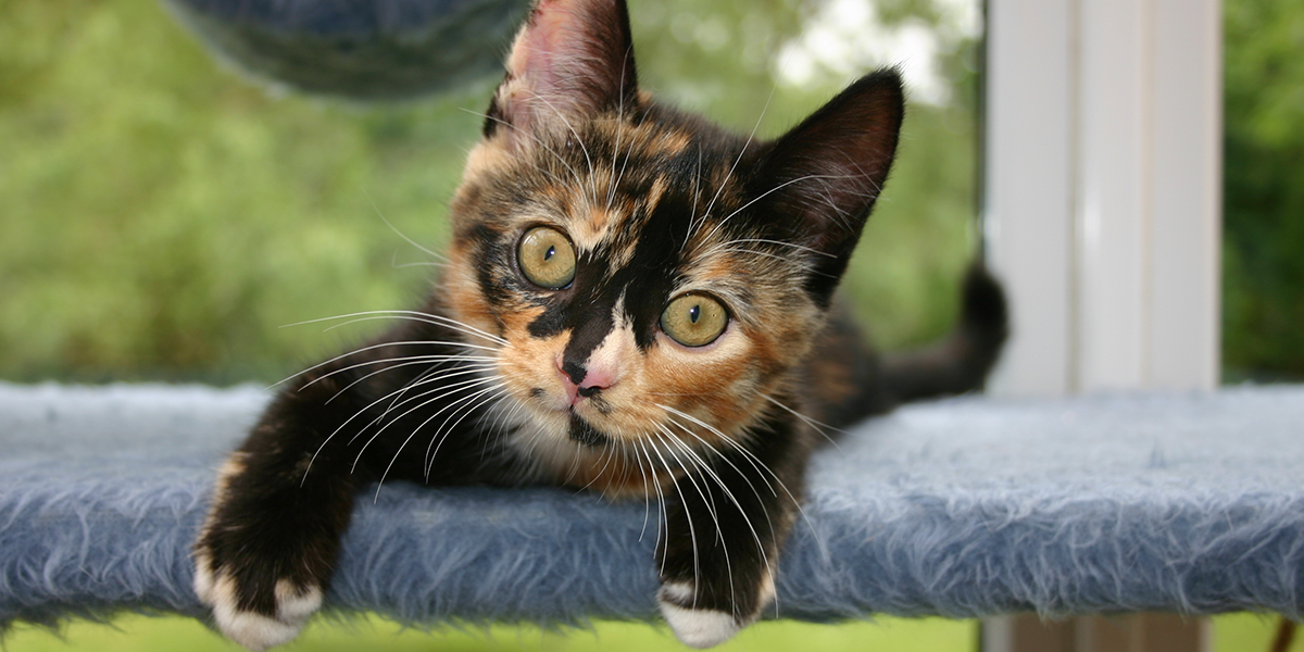 Making Your Home Cat Friendly International Cat Care