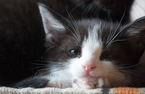 Preparing for your new Cat or Kitten