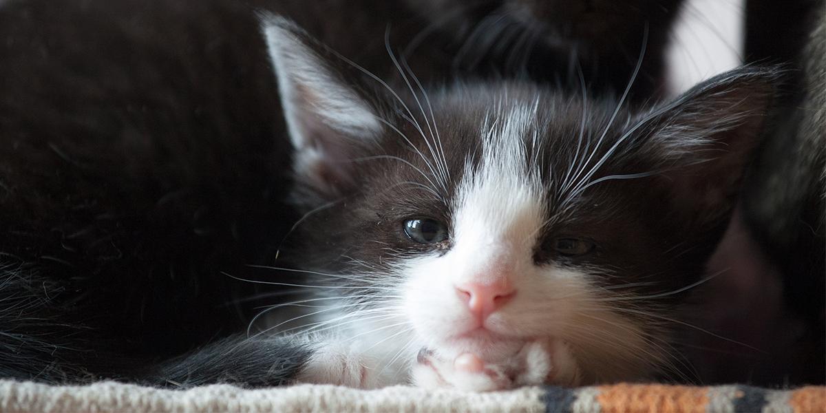 Preparing for your new Cat or Kitten