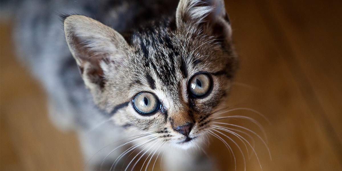 Thinking of getting a cat? | International Cat Care