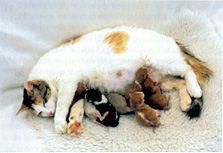 Cat Birth International Cat Care