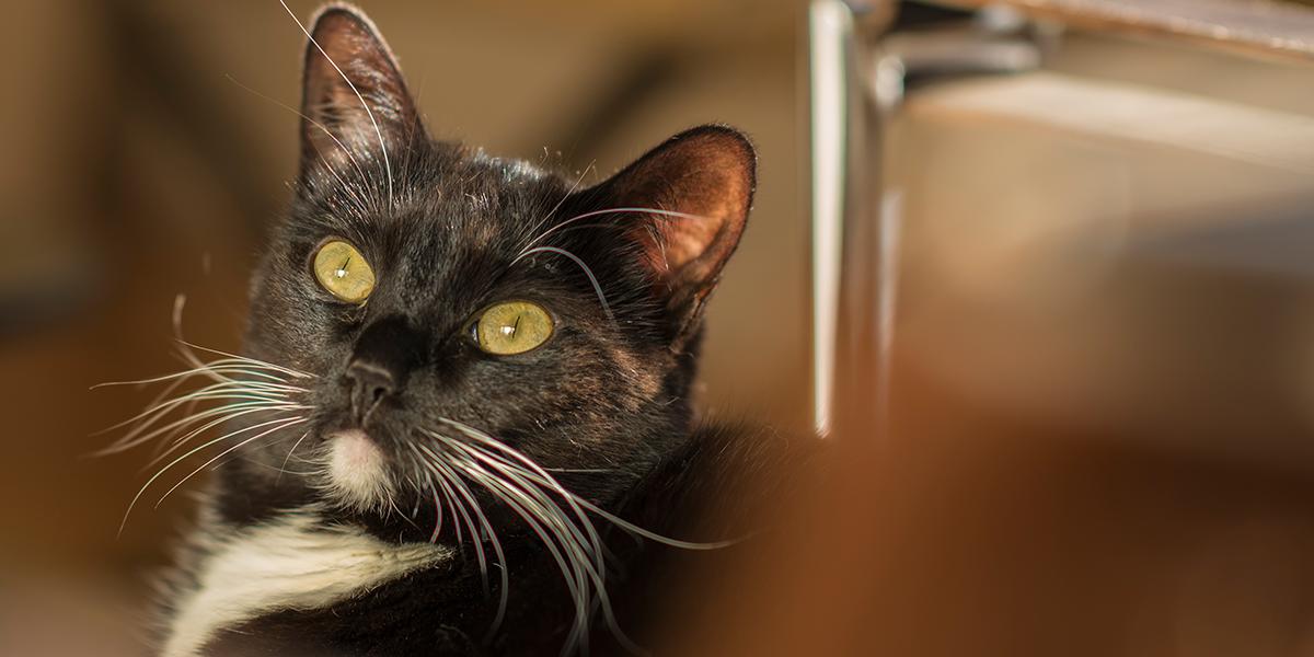 Sensational Constipation In The Cat International Cat Care Customarchery Wood Chair Design Ideas Customarcherynet