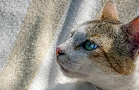 ISFM launches Cat Friendly Courses