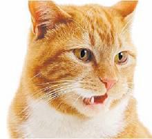 cat scope stinks
