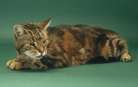 Hyperthyroidism International Cat Care