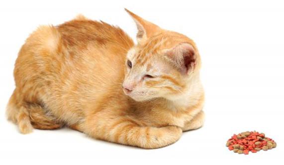 Mèo biếng ăn