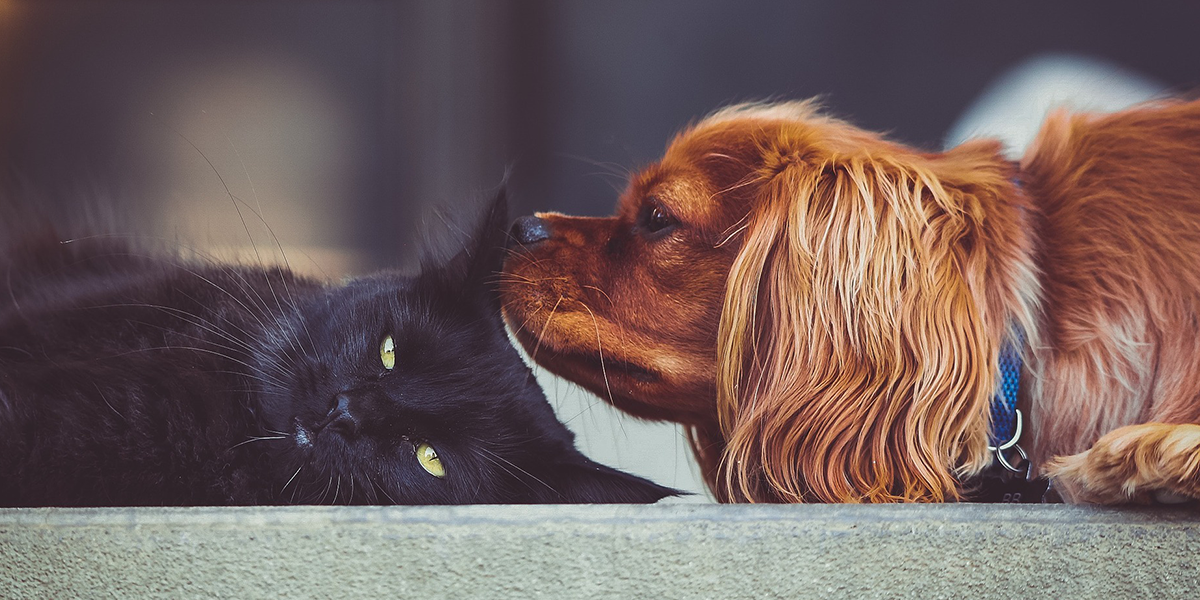 Introducing a Cat or Kitten to your Dog