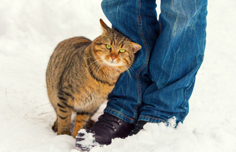 Why do cats rub round their owners' legs?
