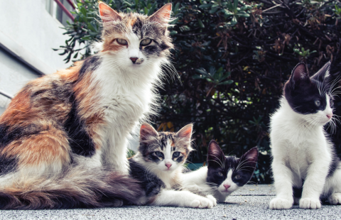 The Social Structure of Cat Life