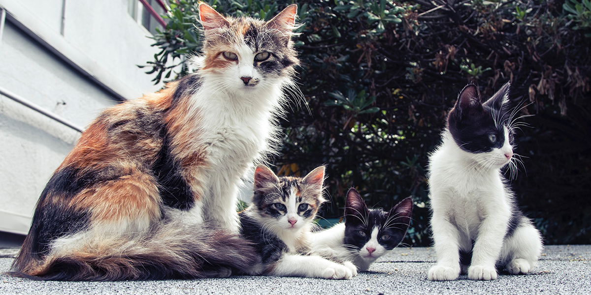 The Social Structure Of Cat Life International Cat Care