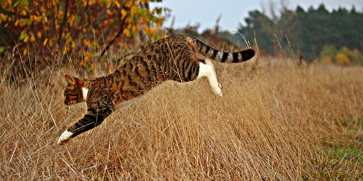 Understanding the hunting behaviour of pet cats: an introduction