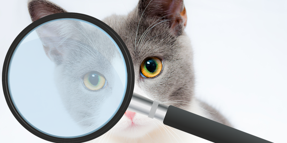 Be a detective for your cat's health