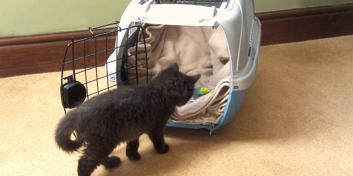 Encouraging your cat to be happy in a cat carrier – video
