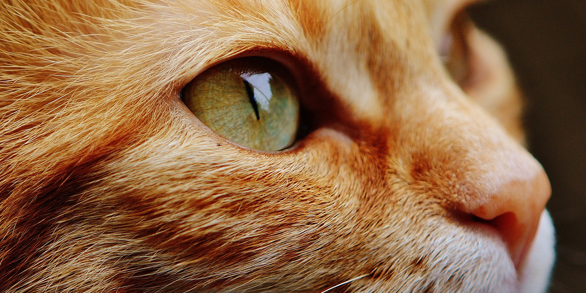 Helping your cat accept having its eyes checked – video