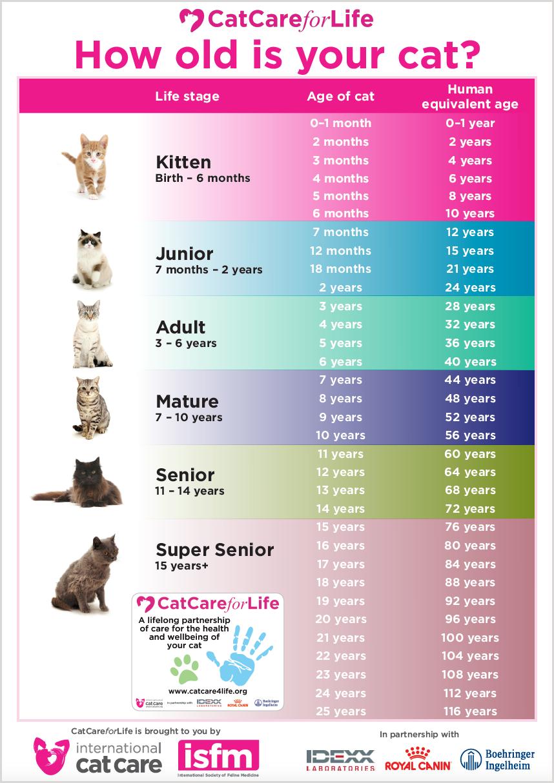 Bảng quy đổi tuổi mèo với con người