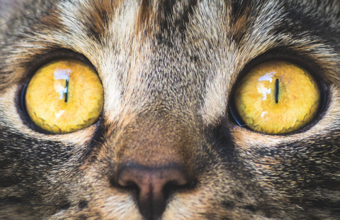 Caring for your cat's eyes
