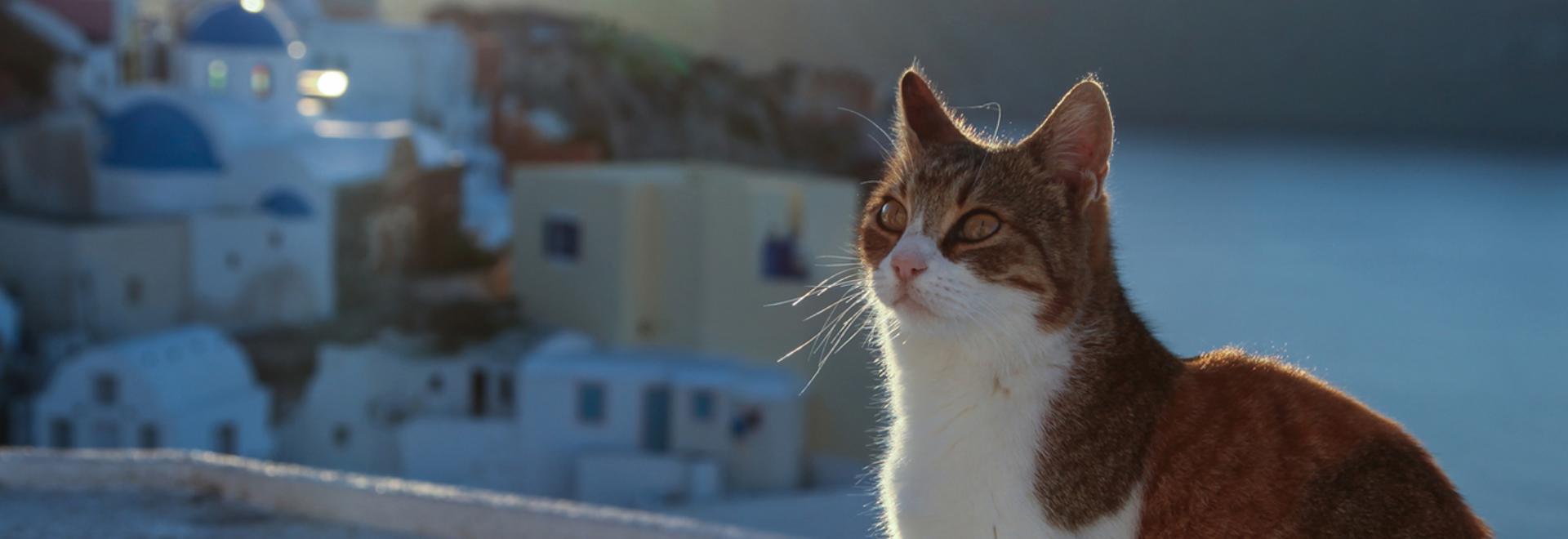 ISFM European Feline Congress 2020 | International Cat Care