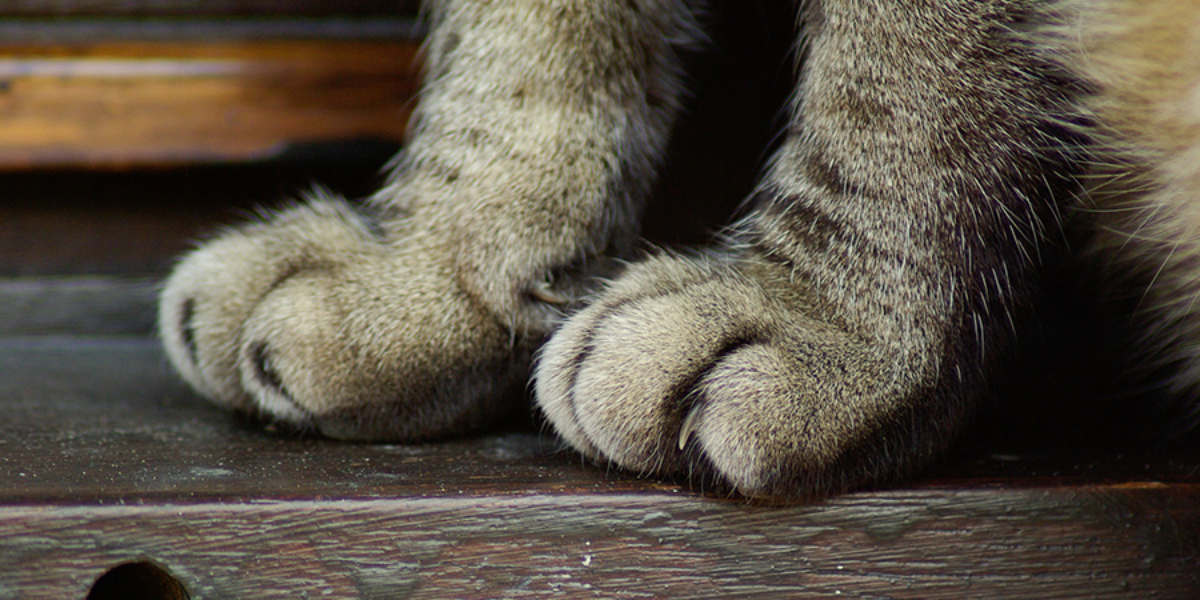 Declawing in cats: why it is unacceptable