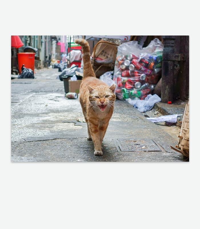 Street Cats Postcard