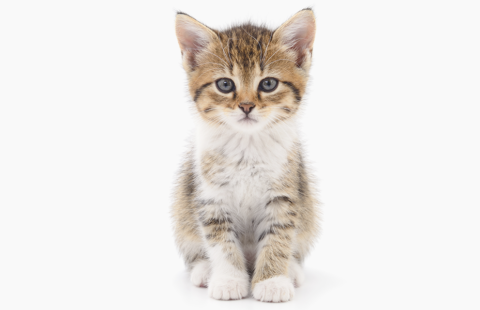 Avoid heartache with The Kitten Checklist
