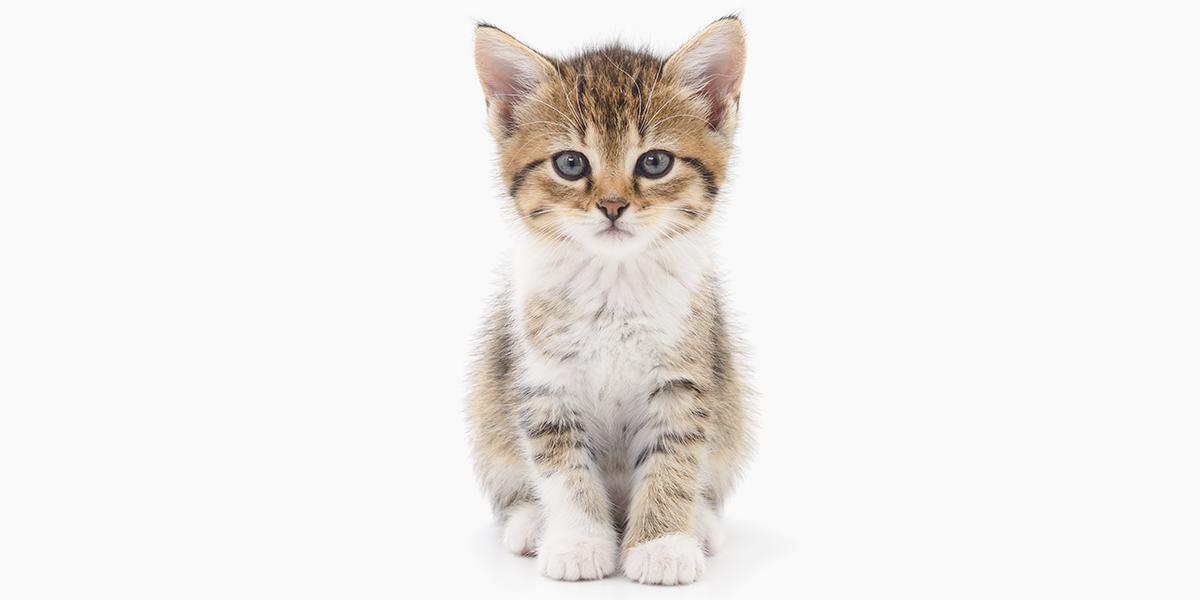The Kitten Checklist