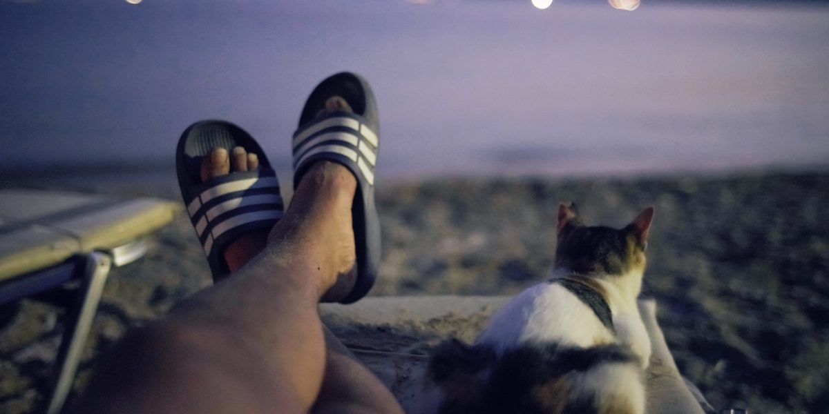 Cat-human relationships captured on camera: winners announced