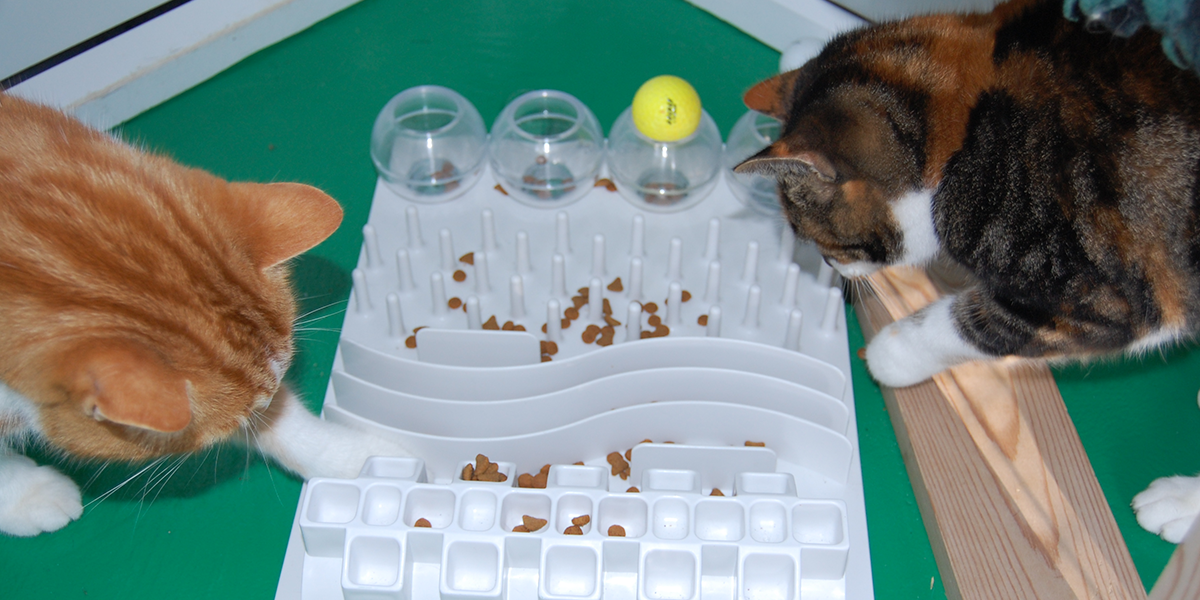 Puzzle Feeders For Your Cat International Cat Care