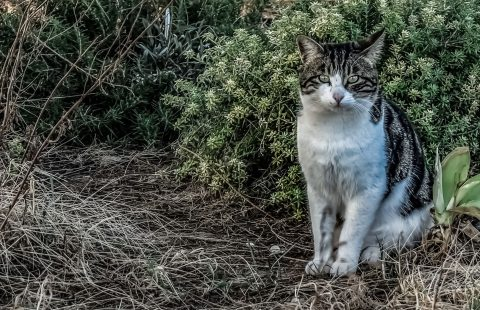 The different needs of domestic cats