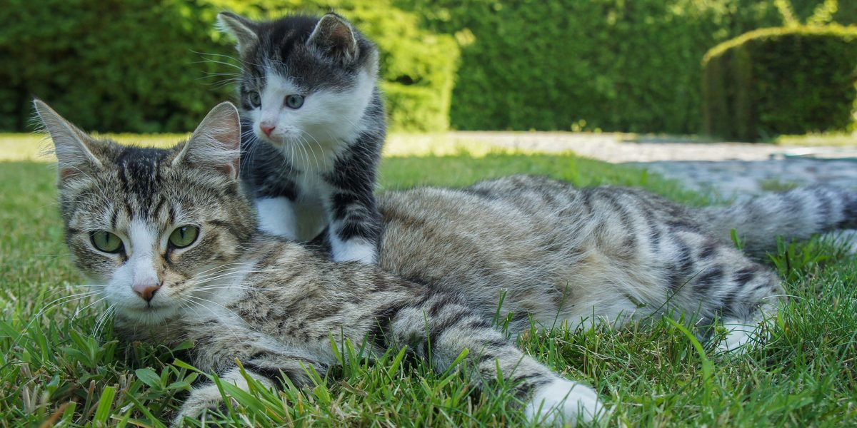 Mum's the word: Exploring the relationship between kittens and their mothers