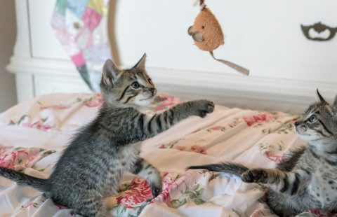 At home with your cat: Games to play