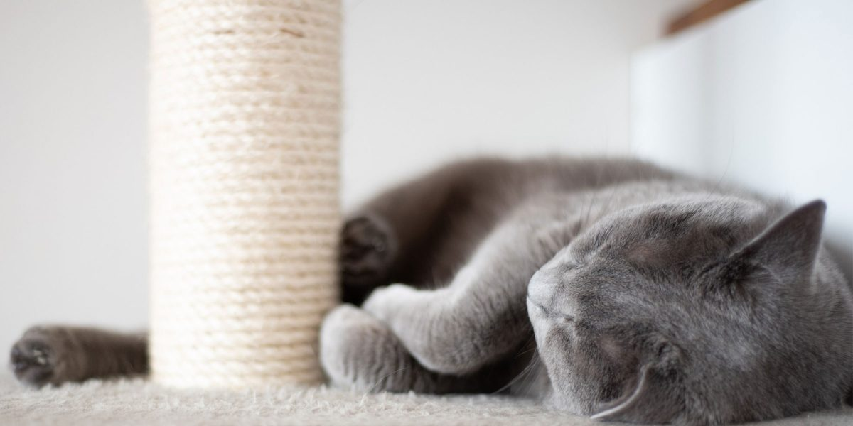 Cat scratching behaviour – a nuisance or necessity?