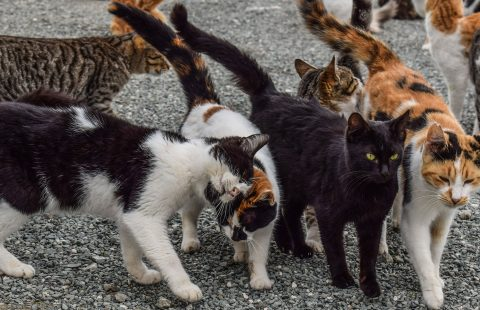 COVID-19: Advice for those undertaking TNR and/or feeding unowned cat colonies during the coronavirus crisis