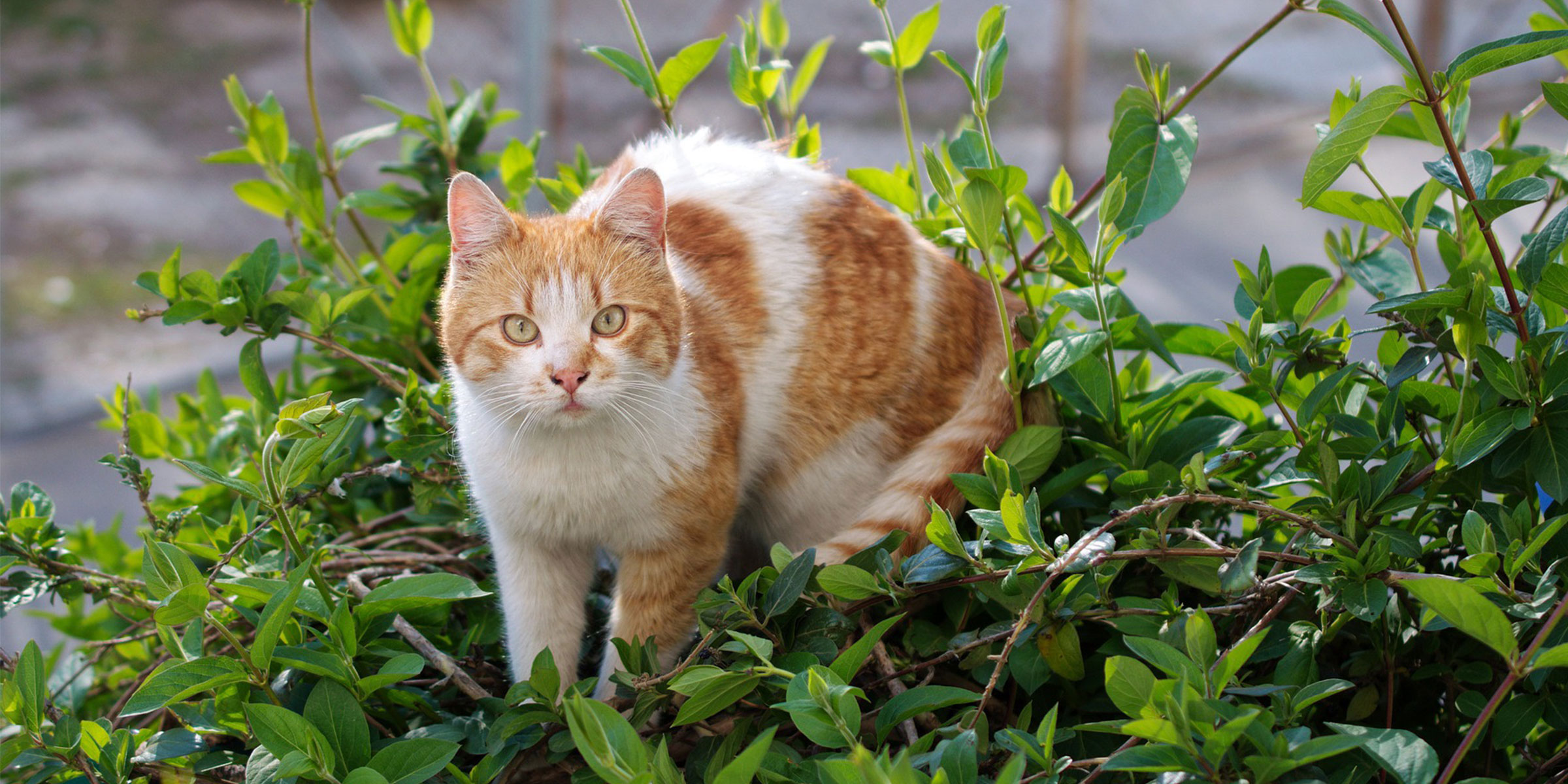 Keeping Cats Safe Plants And Cats International Cat Care