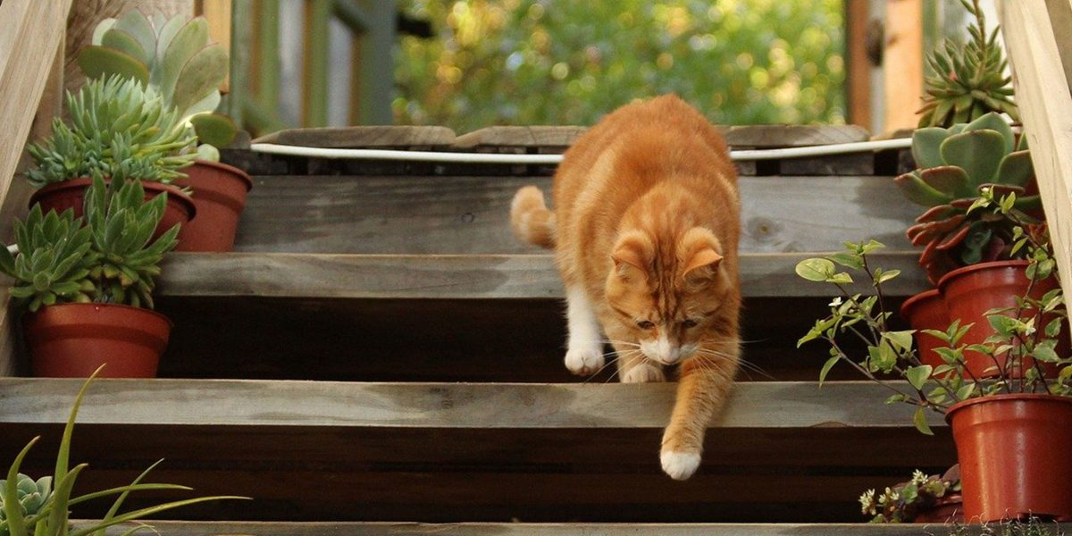 Keeping Cats Safe: Microchipping round-up
