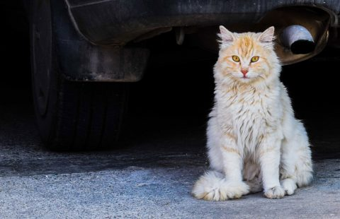 International Cat Care helping unowned cats