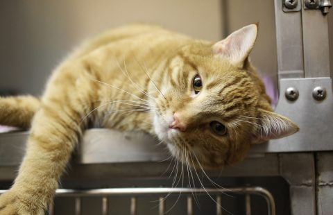 COVID-19: Advice for those working with unowned cats in homing centres during the coronavirus crisis