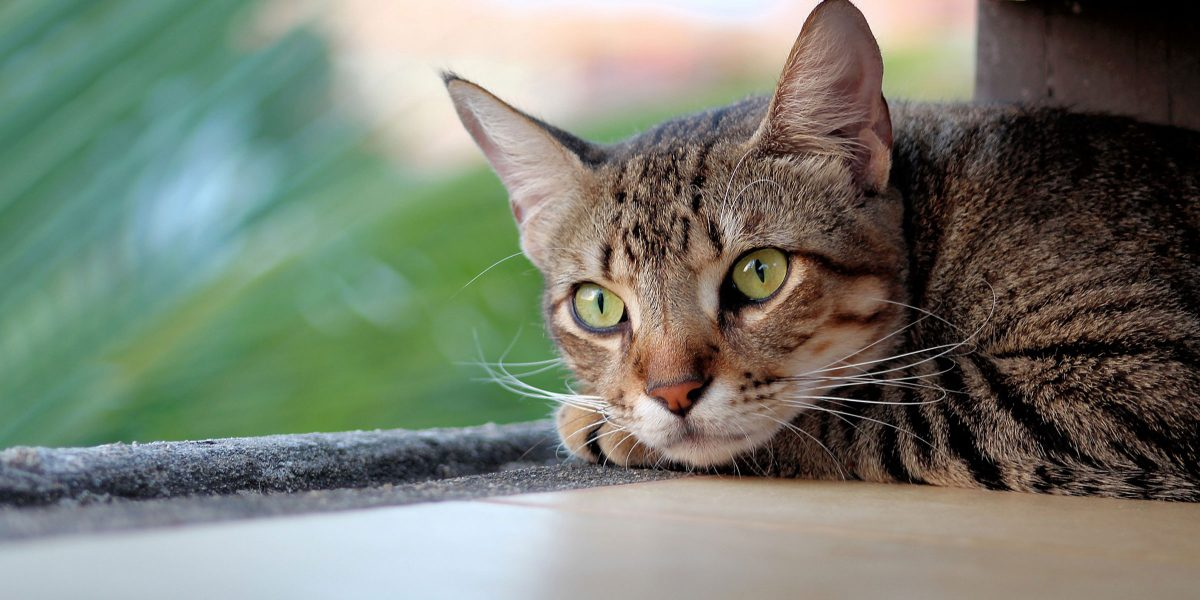 The iCatCare Feline Wellbeing Panel: your questions answered
