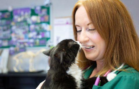iCatCare supports veterinary nurses