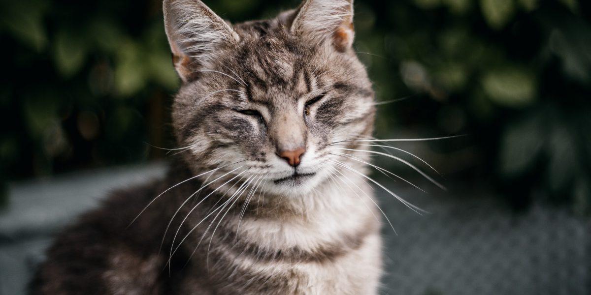 Top Tip: Understanding cat blinks!