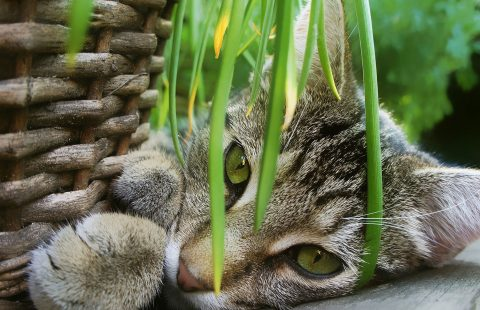 Keeping Cats Safe: Plants and cats round-up