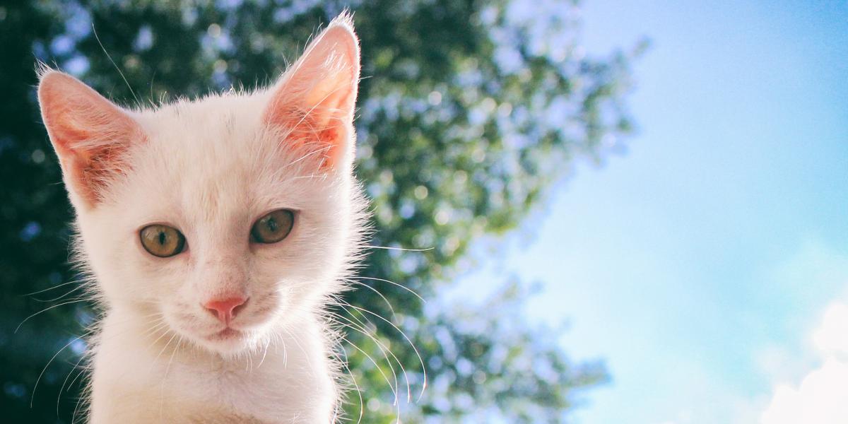Следует ли использовать солнцезащитный крем для моей кошки?