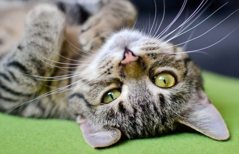 Keeping Cats Safe: DIY products