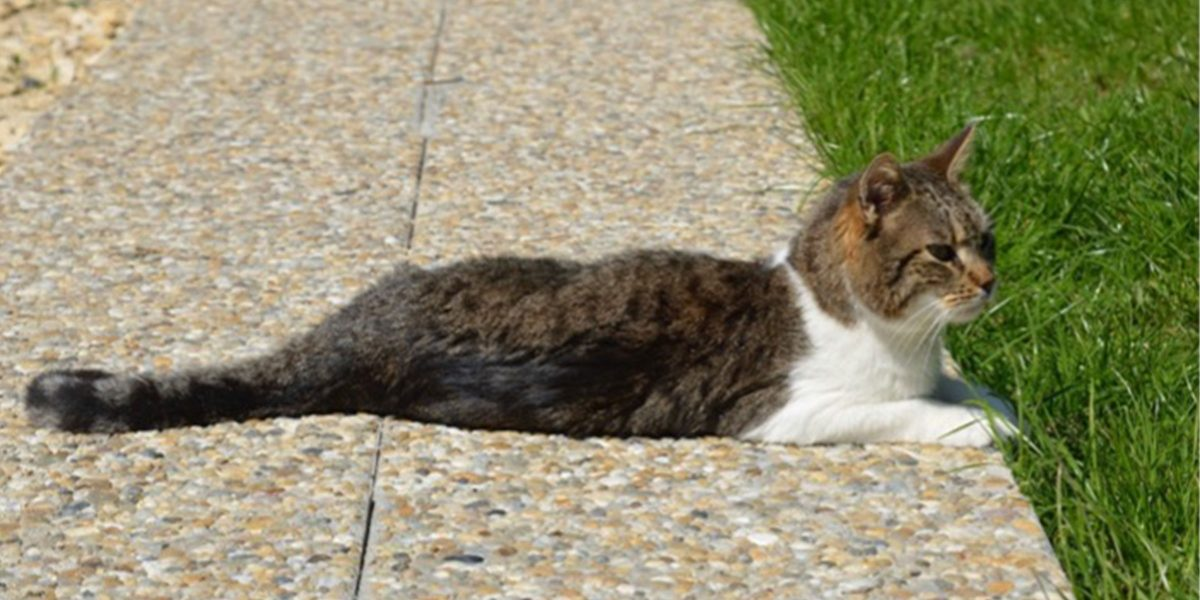 Buffy's story – How introducing Cat Friendly Homing makes a difference, one cat at a time