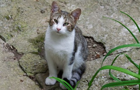 Keeping Cats Safe: Cats and household chemicals round-up