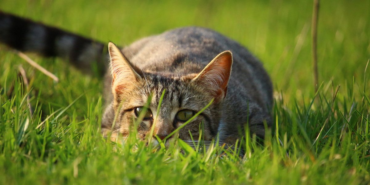 Keeping Cats Safe: weed killer