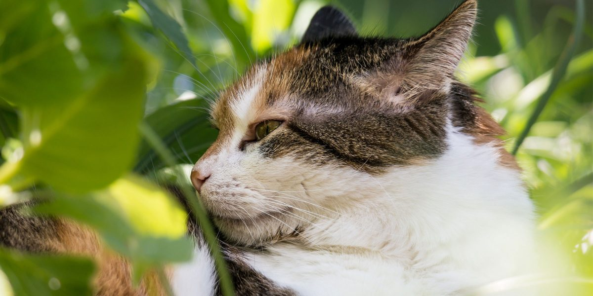 Spotlight on Science: Domestic cats (Felis catus) discriminate their names from other words