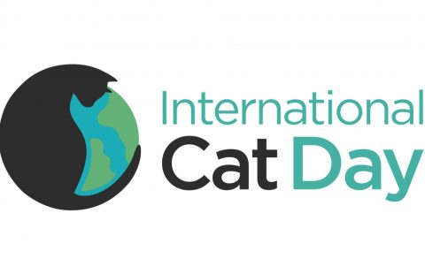 Making Happy Cats this International Cat Day